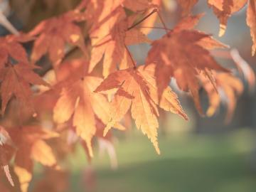 描写秋天的优美句子摘抄 一夜透雨,寒意沁胸