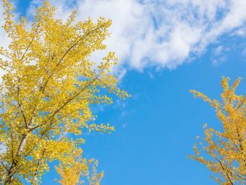 2020立秋节气的祝福说说   号角,吹响秋天的创意