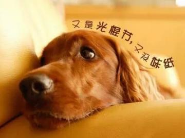 双十一光棍节单身狗的心情说说
