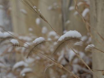 描写小雪时节的祝福句子