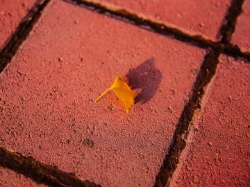 秋分时节,祝福来报到的温馨句子