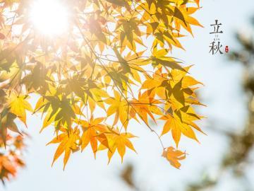 关于立秋的谚语说说:早上立了秋,晚上凉嗖嗖