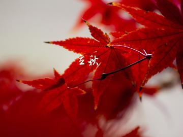 关于二十四节气立秋的唯美心情说说