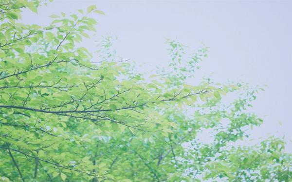 关于仲夏的唯美句子朋友圈心情说说