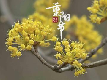 重阳节登高发朋友圈的祝福文案