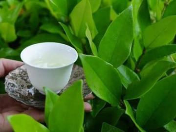绿茶婊经典语录