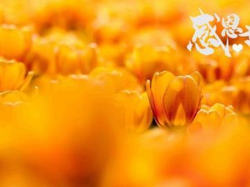 感恩节祝福语:感恩的情,凝成一片片的祝福