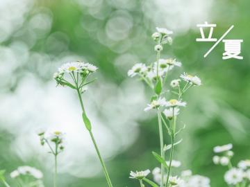 立夏时节经典诗词 槐柳阴初密,帘拢署尚微。