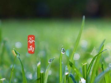 24节气谷雨节日说说 谷雨时节祝福多,小小信息表我心