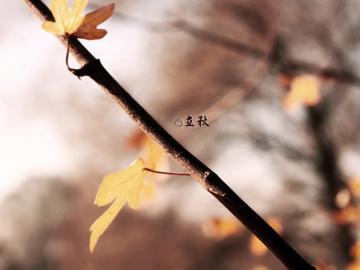 又是一年立秋到,夏暑总被秋风扫