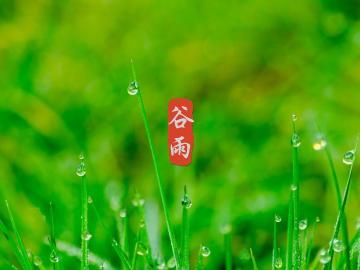 二十四节气谷雨的温馨祝福说说:好雨生百谷,好友常祝福