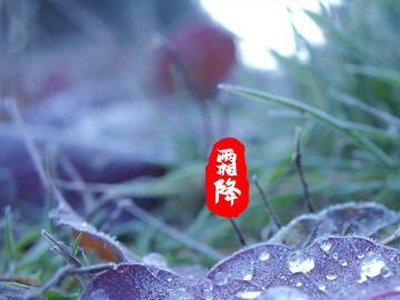 传统节日之霜降唯美句子
