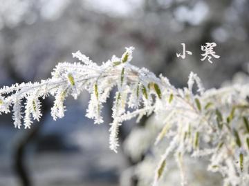 小寒時節的經典諺語說說  小寒勝大寒,常見不稀罕
