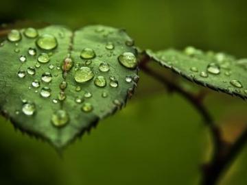 二十四节气寒露谚语:寒露多雨水,春季无大水
