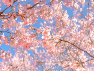 描写的春天英文唯美句子 春天是万物复苏的时节