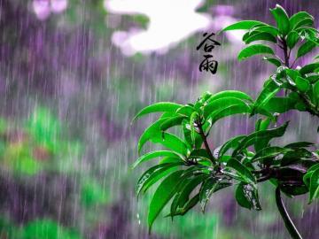 适合谷雨节气发的问候语 诗情传画意,谷雨传心意