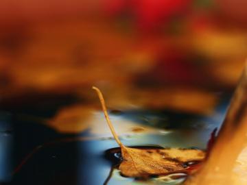 描写秋天的诗词
