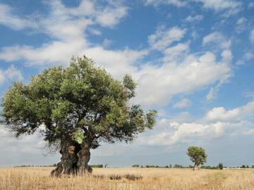 《白色橄榄树》经典语录