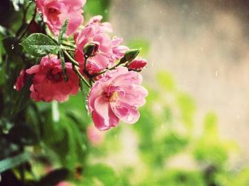 一个人的下雨天的心情说说 让人看到心疼的心碎句子