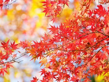 关于秋天的诗句