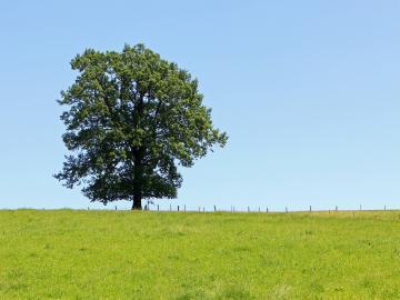 关于余生的唯美句子:有那么一个人,需要用尽余生来忘