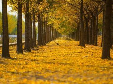 秋分时节,遇见醉美的诗词