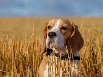 养宠物真的能缓解孤独吗  看着它的时候内心可以突然柔软起来
