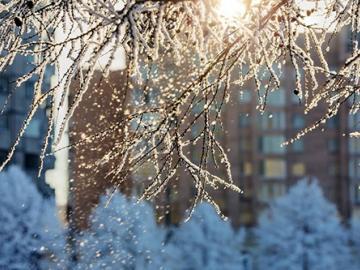 下雪天創意浪漫文案 霜雪吹滿頭,也算共白首