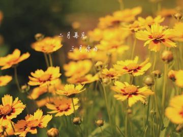 二月最后一天说再见的心情说说 愿所有的美好都能如约而至