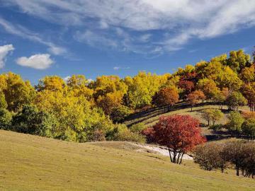 初秋微凉的唯美句子说说:谢了夏日的热情炽焰,如今惹来了初秋的冷凉