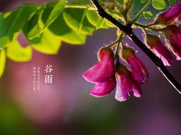 谷雨时节雨霏霏 祝福说说传情谊
