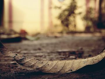 情緒很差感覺心累的傷感句子   走著走著,就散了