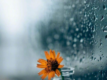 下雨天的伤感说说   我的城市又下雨了,我又想你了