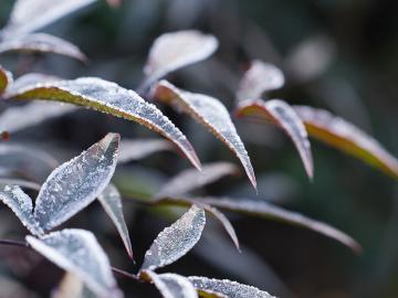 霜降到天先寒的祝福说说