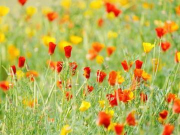 繁华落尽的唯美句子 看细水长流,看春暖花开