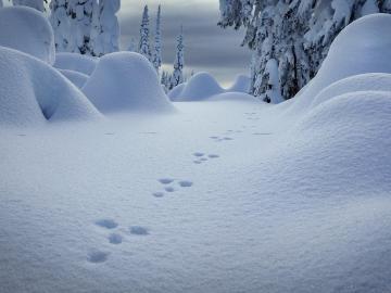 下雪天时适合发朋友圈的伤感句子