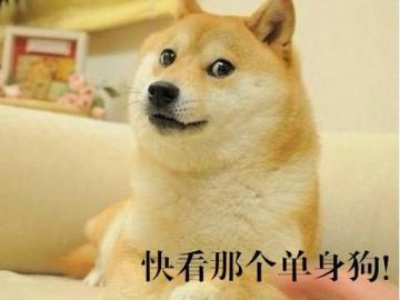 520单身狗霸气的句子 说好一起做单身狗,你却偷偷撩了猫