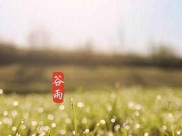 盘点谷雨时节的祝福语 谷雨春光好,健康跟你跑