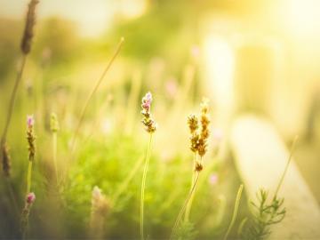 唯美小清新的句子 时光静好,心永远微笑向暖