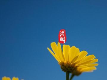 清明节和家人去扫墓的心情句子 年年清明年年,今又清明故人无
