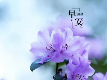 早安最美图片说说 一个惊艳了时光,一个温柔了岁月