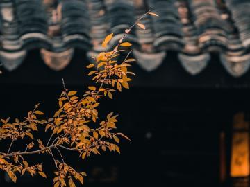 朋友圈秋天唯美句子 秋风生渭水,落叶满长安