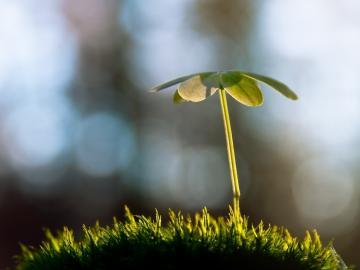 春天来了,所有的美好也会随风而至的唯美说说