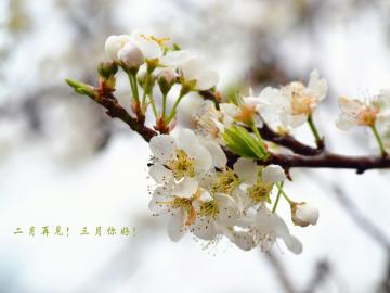 和春暖花开的三月说声你好的早安物语