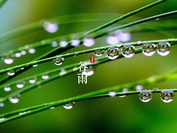 马上到24节气的谷雨时节了,奉上几句文案