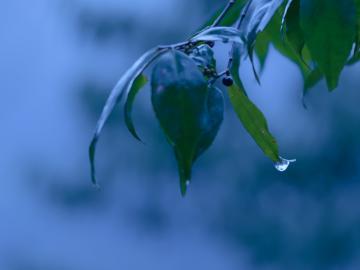 抖音最好听的个性签名  看过花开的人,便会懂得风的温柔