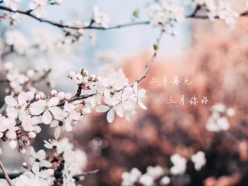 告别苦难的二月,迎来春光明媚三月的唯美说说