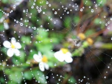 适合下雨天触景伤情的心情说说