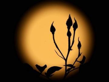 描写中秋圆月的唯美句子