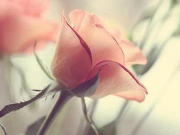 伤感爱情短语 你不知道我的世界都是你